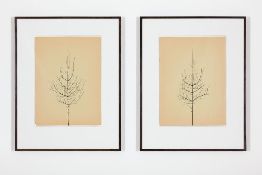 Pair of Winter Drawings 22vs35 and 23vs32, 3 January 2016 by Peter Liversidge