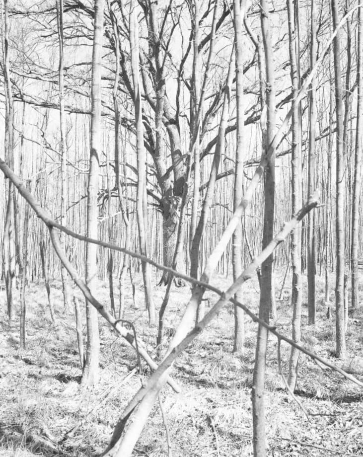 Untitled (from NATUR) by Michael Schmidt