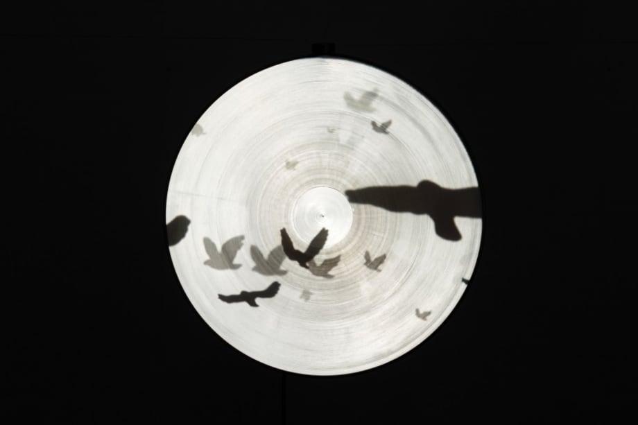 FREE BIRDS by Jane Lee