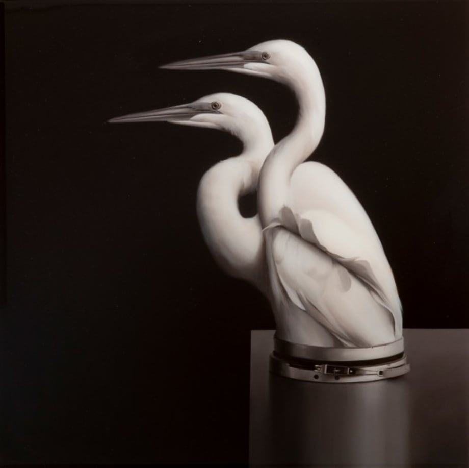 Egrets with Pressure Seal by Sam Leach